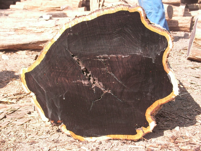 African Blackwood (grenadilla) tree trunk cross section