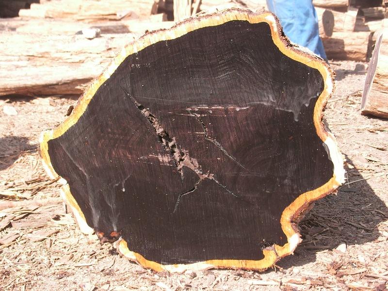 African Blackwood (grenadilla) tree trunk cross section